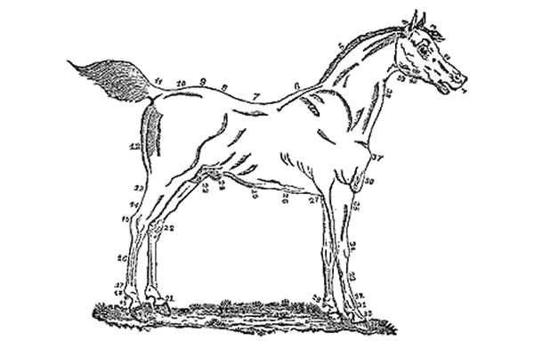 drawing of a horse with every part of it labeled